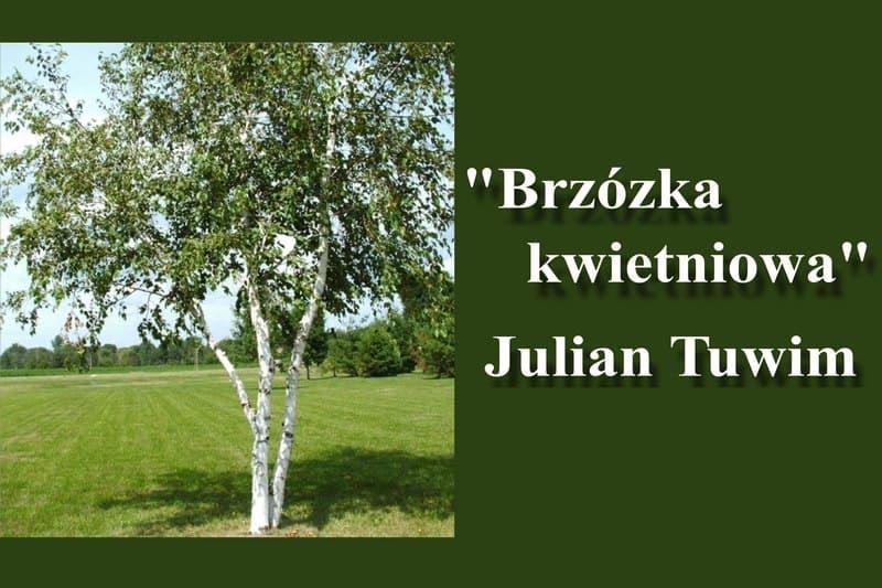 Юлиан Тувим «Апрельская березка»