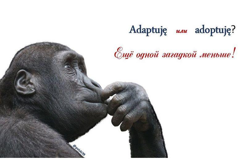 Adaptuję или adoptuję?