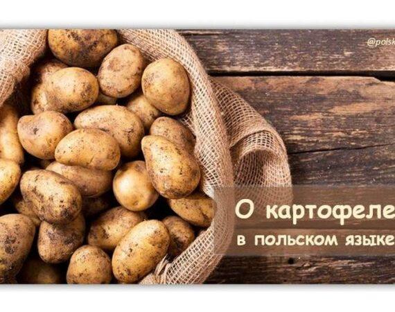 О картофеле в польском языке