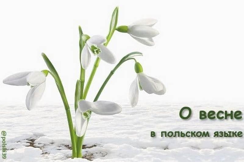 О весне в польском языке