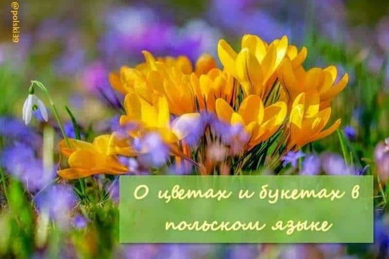 О цветах и букетах в польском языке